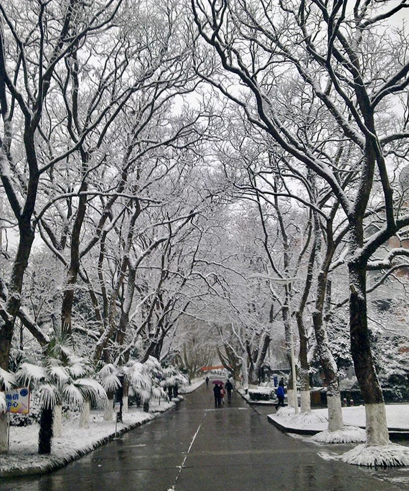 alt 道路雪景