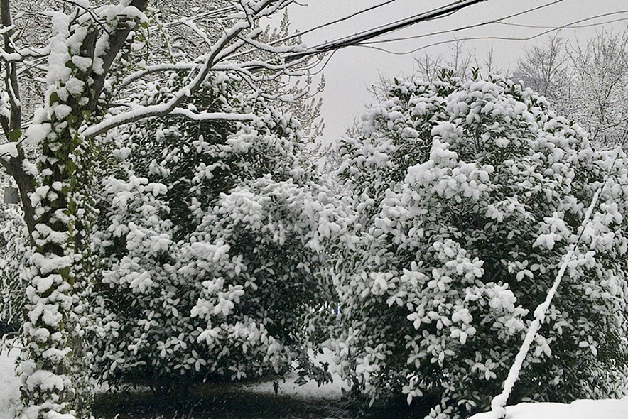 alt 雪景,膨化食品